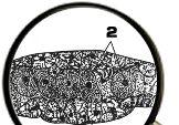 ゴキブリの脂肪体