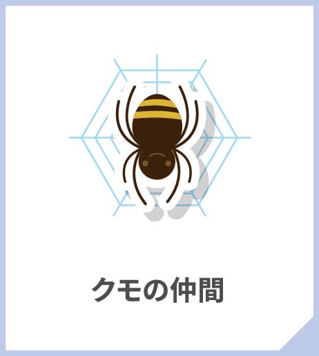 クモの仲間