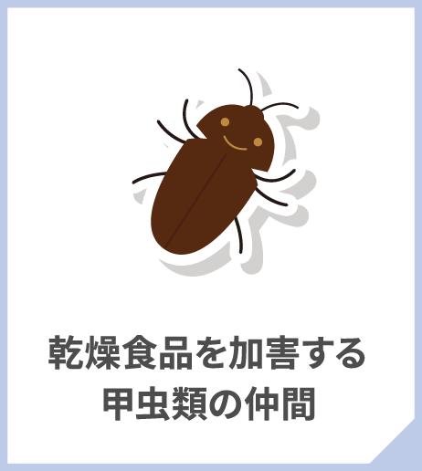 乾燥食品を加害する甲虫類の仲間
