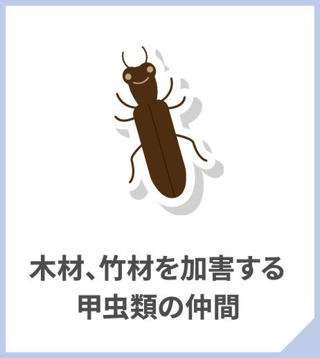 木材、竹材を加害する甲虫類の仲間