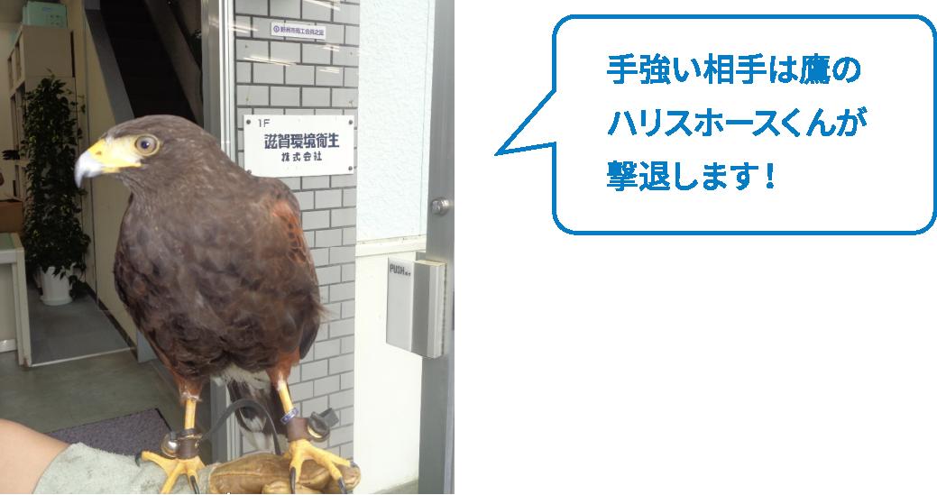 手強い相手は鷹のハリスホースくんが撃退します!